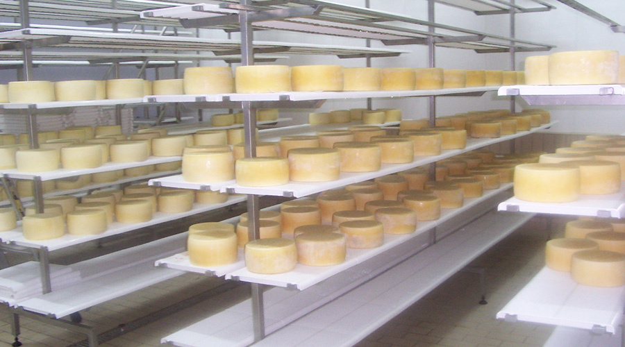 SHELVES FOR HARD CHEESE MATURING