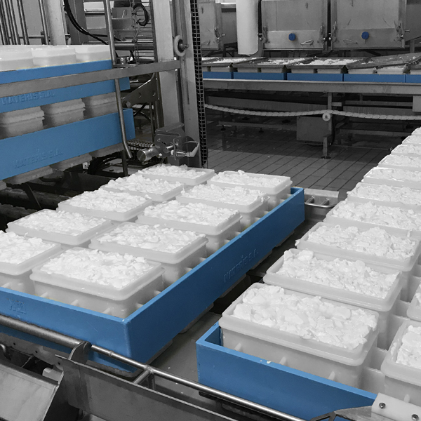 FETA PRODUCTION MACHINES